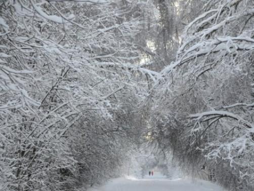 Без опадів: погода 25 лютого у Гощі