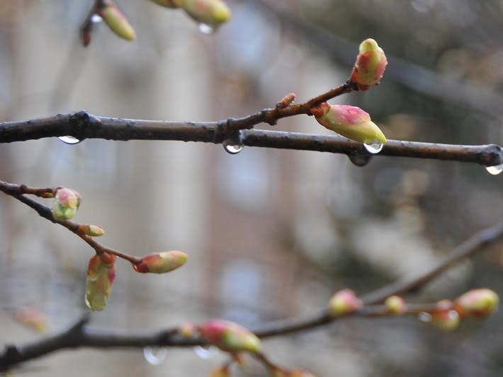 Дрібний дощ: погода у Гощі 4 березня