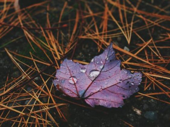 У Гощі прогнозують дощ