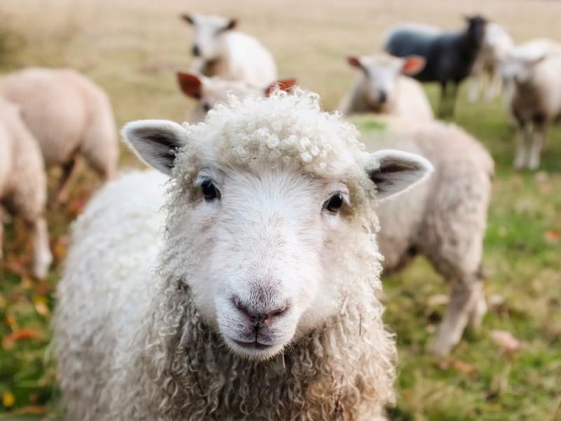Свята, іменини та дати 4 жовтня: Всесвітній день тварин