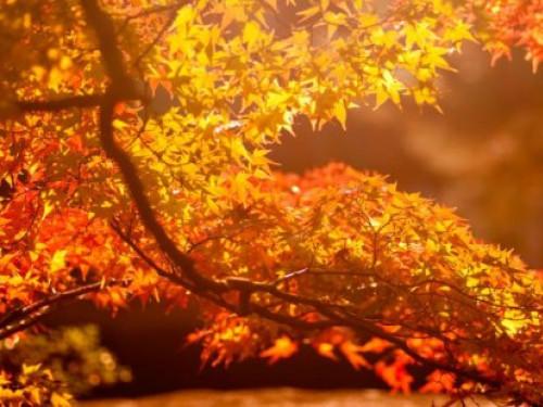 У Гощі очікується ясна погода 5 жовтня