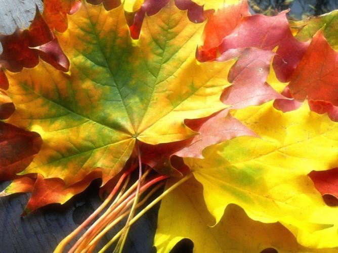 У Гощі 10 жовтня буде ясна погода