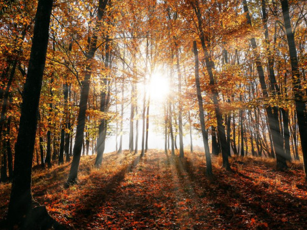 У Гощі 31 жовтня буде сонячно