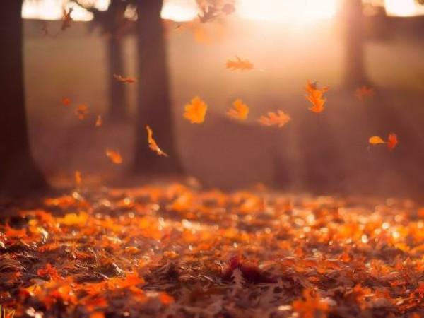 Погода у Гощі 9 листопада: на градуснику позначка опустилася до 0