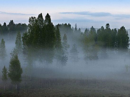 Туман і хмари: погода у Гощі на 10 жовтня
