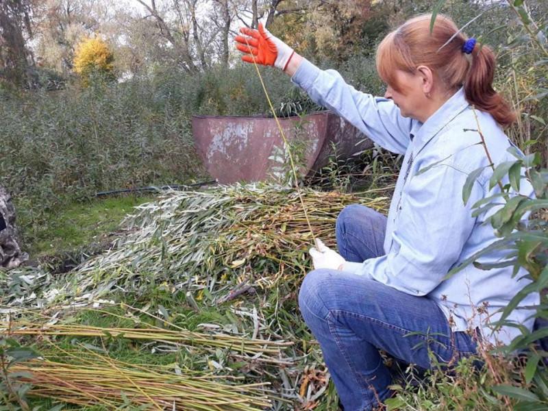 У Гощі безробітних навчають майстерності плетінню з лози