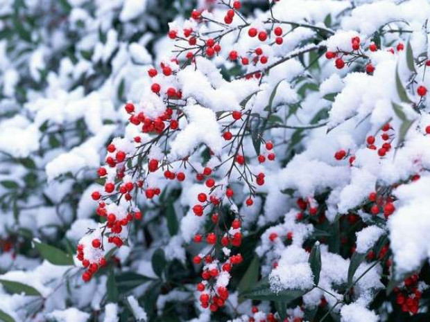 Дощ зі снігом: погода у Гощі 25 листопада
