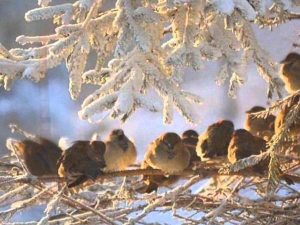 Ясний ранок: погода у Гощі 30 листопада