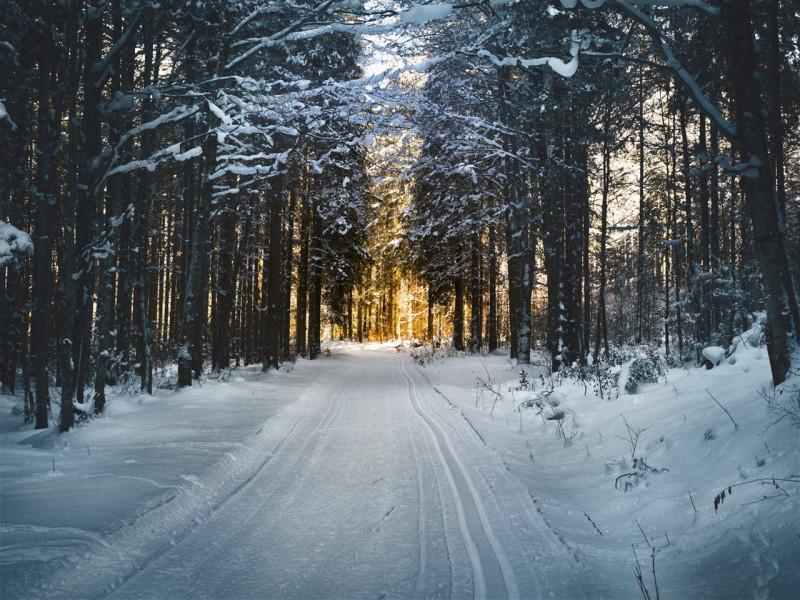 Свята, іменини та дати 1 грудня: що відзначають у перший день зими