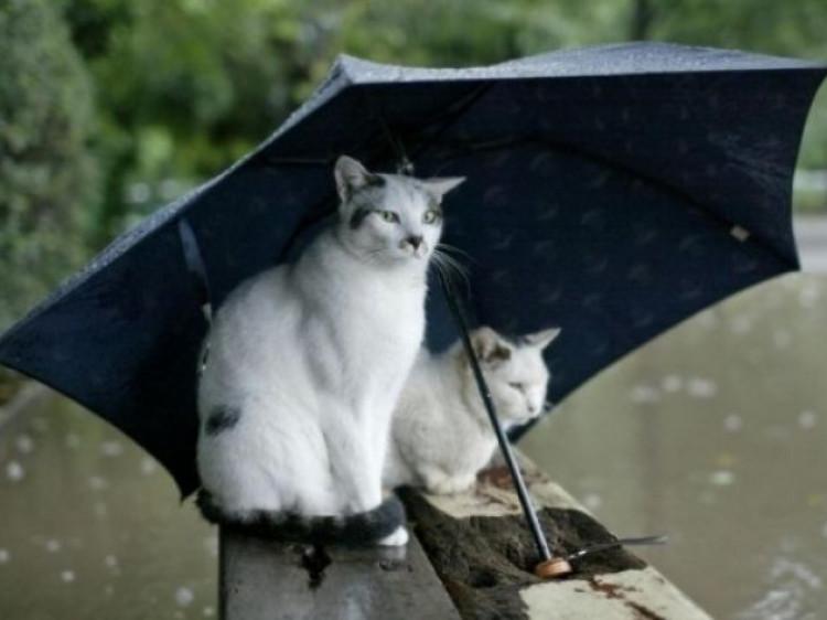 У Гощі впродовж дня 10 грудня очікується дощ