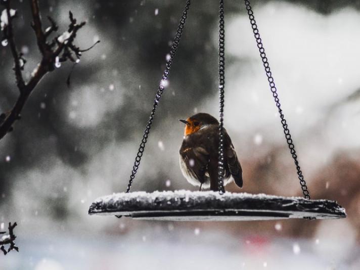 Хмарно та сніг: погода у Гощі 12 грудня
