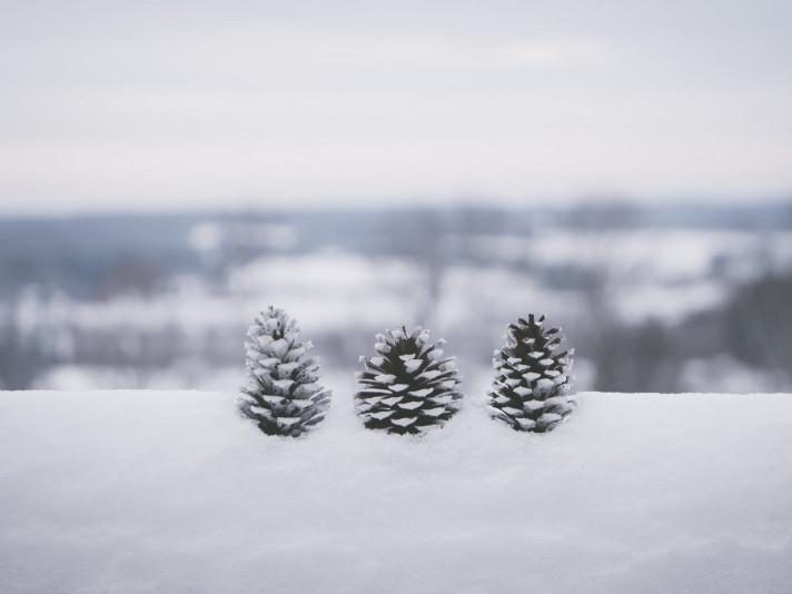 У Гощі впродовж усього дня 13 грудня йтиме сніг