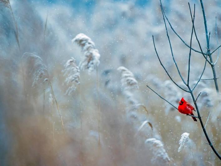 Похмура погода очікується у Гощі 15 грудня