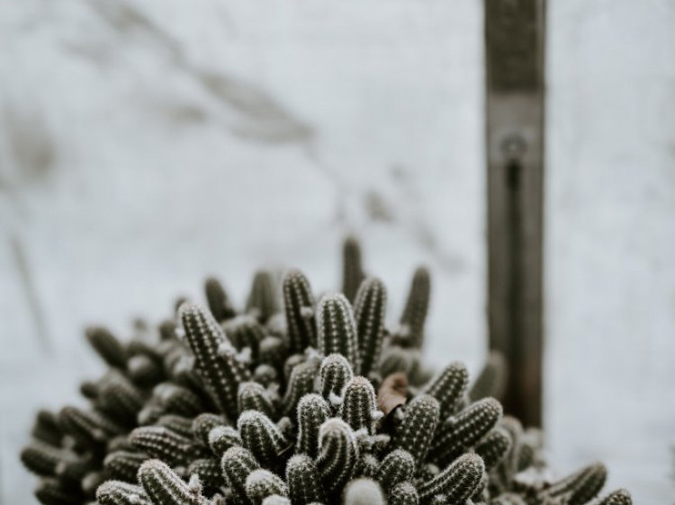 -11°  та хмарно: погода у Гощі 18 грудня