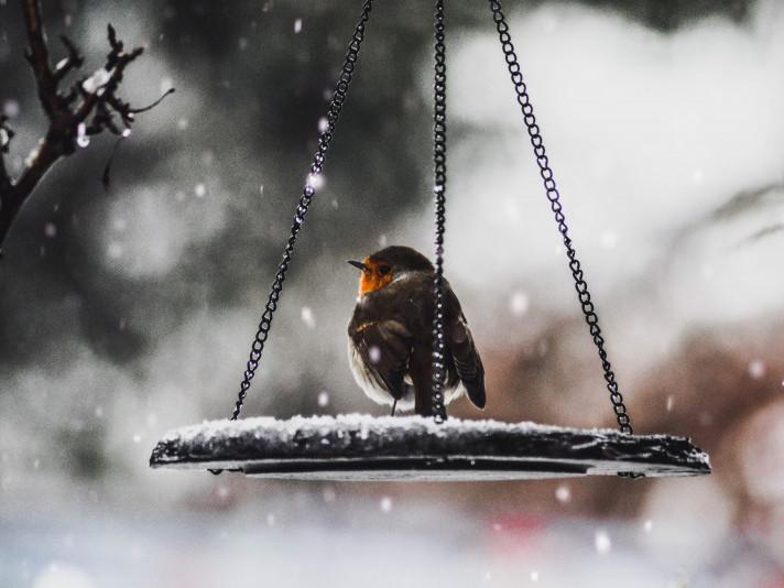У Гощі 25 грудня очікується дрібний сніг