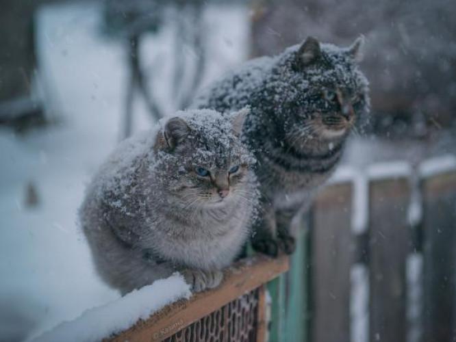 Мокрий сніг: погода у Гощі 29 грудня