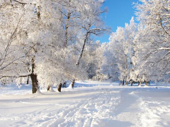 Погода: у Гощі 6 січня йтиме сніг