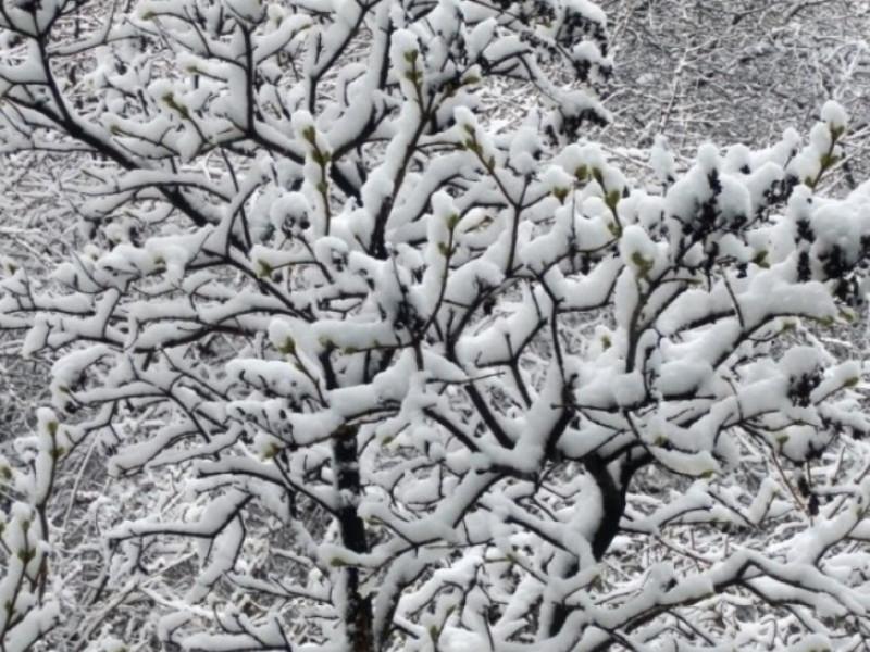 Погода у Гощі 11 січня: хмарно та йтиме сніг