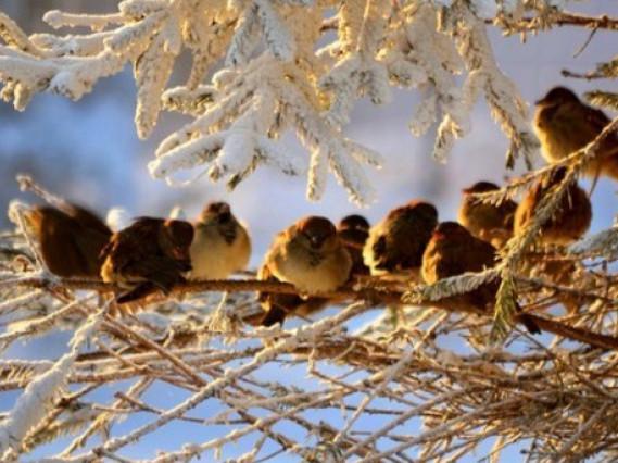 Погода: у Гощі 16 січня очікується ясна погода