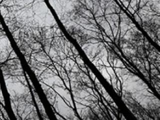 Похмура погода очікується 15 лютого у Гощі