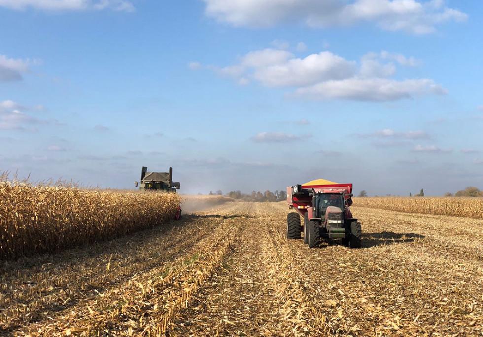 Процес збору урожаю кукурудзи